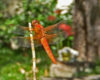 Lessons from a Dragonfly